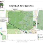 Boulder County Emerald Ash Borer. Quarantine Area and Information.