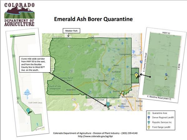Boulder County Emerald Ash Borer Quarantine
